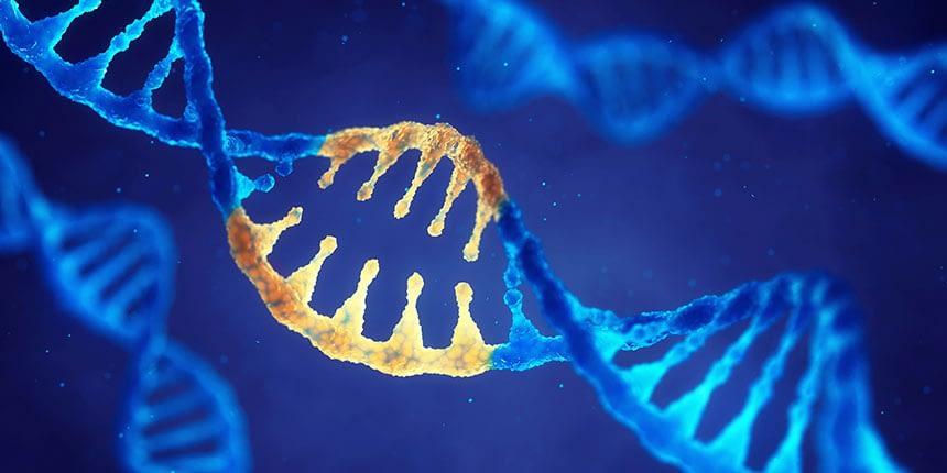 Les mutations du gène IDH1