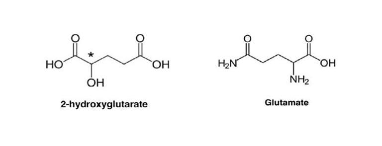 Structure du 2-hydroxyglutarate et du glutamate